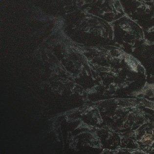 Black Burst (Maple Burl)